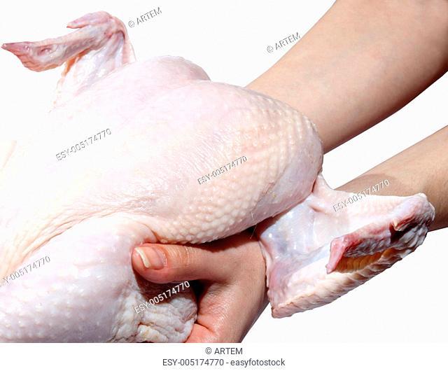 Fresh hen in a hand