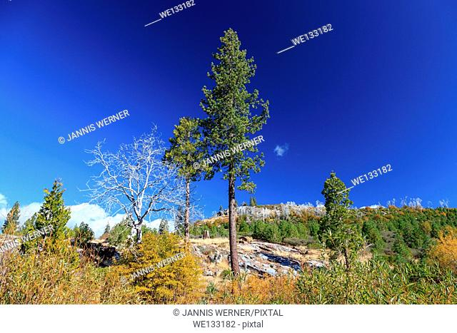 Sparse trees on a high plateau on the California side of the Sierra Nevada