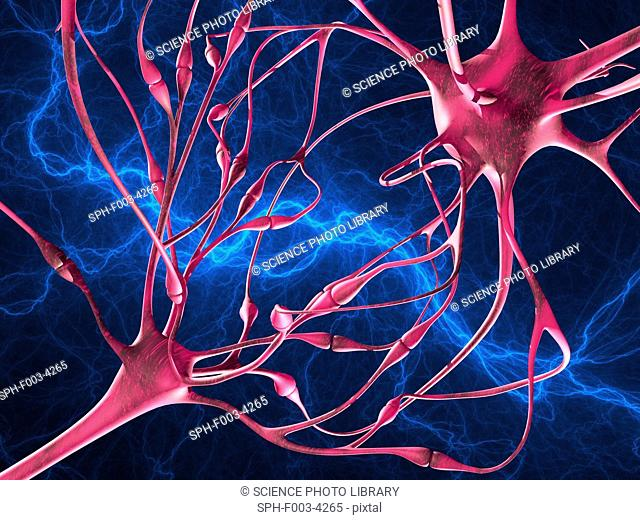 Nerve synapses, computer artwork