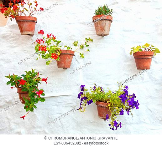Terracotta vases with colorful flowers hanging on white wall