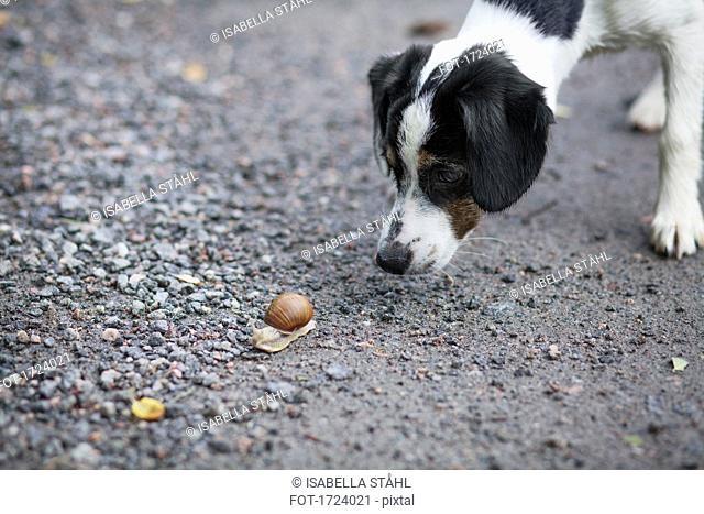 Close-up of dog looking at snail on ground