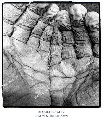 Caucasian boy's water logged fingers