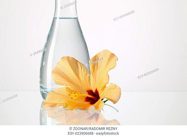 Vase Flower Crystal Stock Photos And Images Age Fotostock