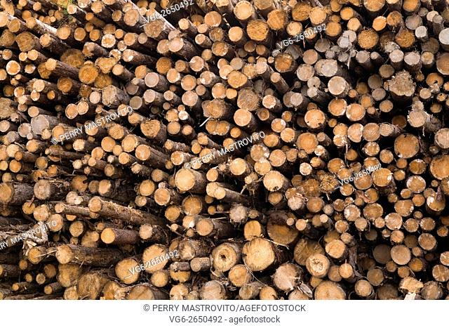 Pile of cut timber logs at a lumber mill, Quebec, Canada
