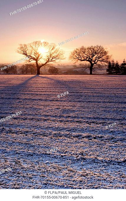behind tree snow stock photos and images age fotostock