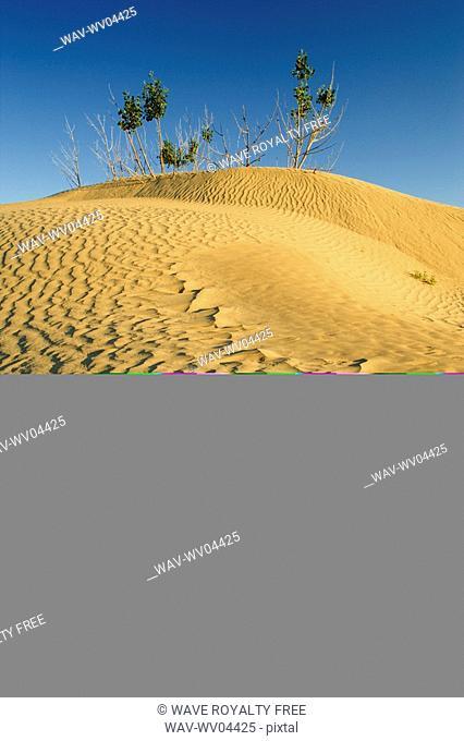 The Great Sandhills near Sceptre, Saskatchewan