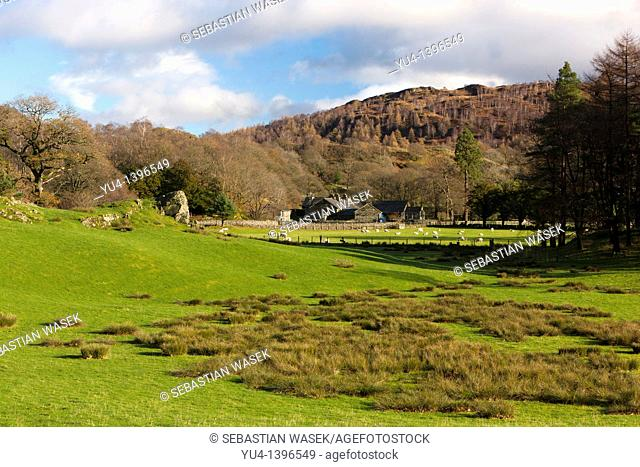 Farm in Lake District National Park, Nether End, Yewdale, Cumbria, England, Europe