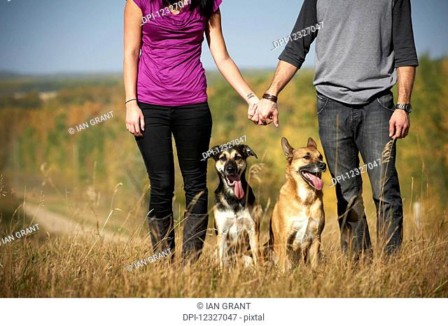 Portrait of a couple standing and holding hands with their two dogs and an autumn coloured landscape in the background; Alberta, Canada