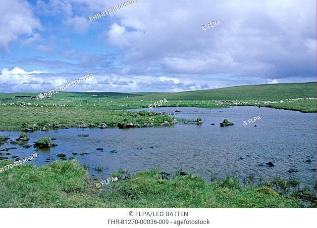 Lochan habitat, freshwater loch, Fetlar, North Isles, Shetland, Scotland, july