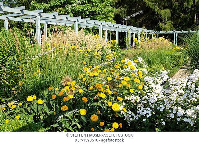 False sunflower Heliopsis helianthoides var  scabra 'Goldgrünherz' and garden phlox Phlox paniculata, Karl Foerster Garden, Erholungspark Marzahn, Berlin