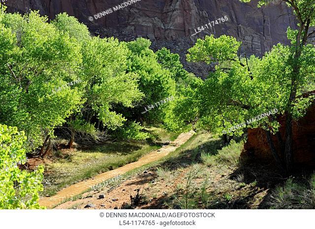 Spring Fruit Trees Capitol Reef National Park Utah