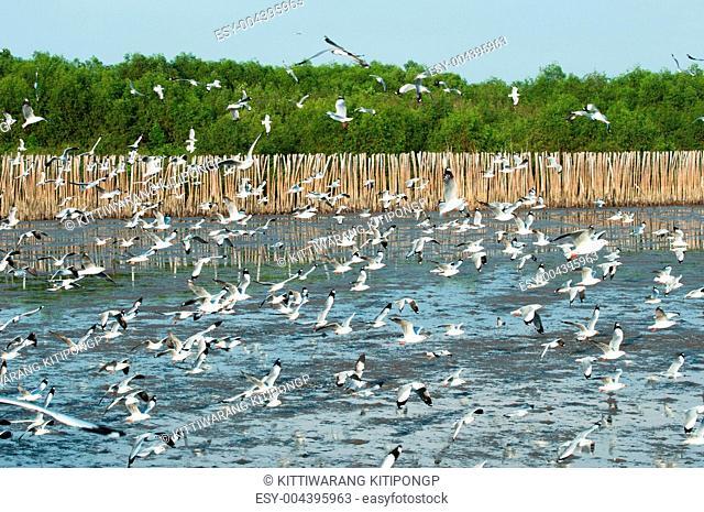 the seagull crowd move to Bangpu, Thailand