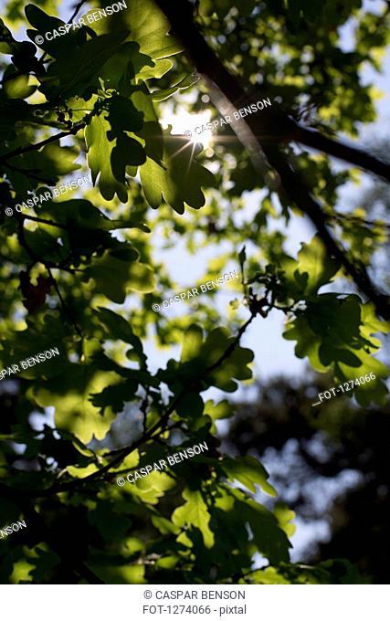 Sun shining through dense foliage