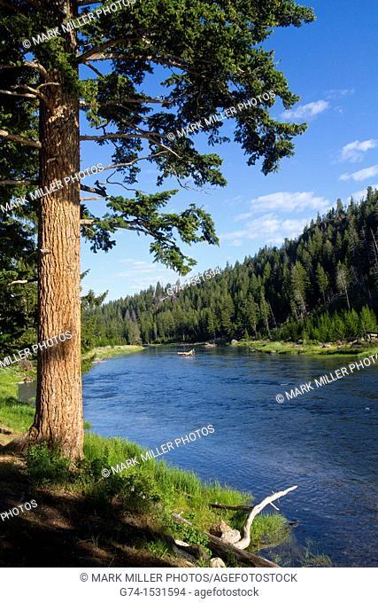 Madison River Yellowstone National Park USA