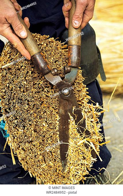 Close up of a thatcher cutting a yelm of straw with a pair of shears