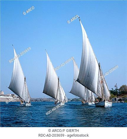 Sailing boats on river Nile, Aswan, Egypt, felucca, feluccas