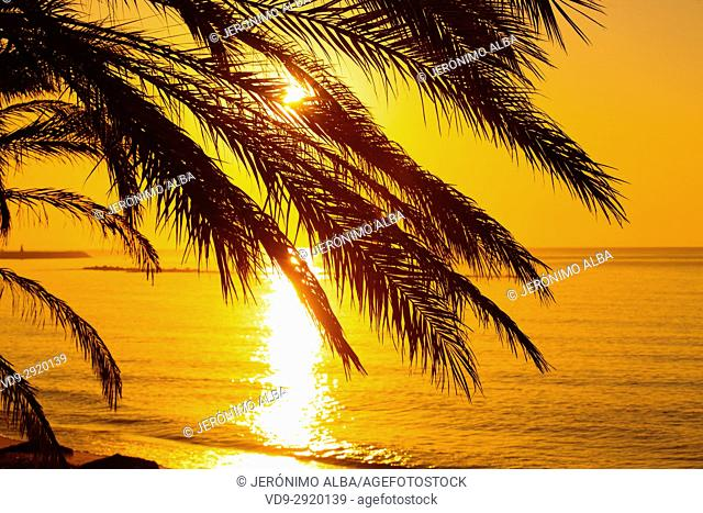 Palm trees and person running, beach at sunrise. Benalmadena. Malaga province Costa del Sol. Andalusia Southern Spain, Europe
