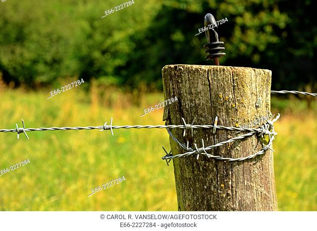 Fencepost with barbed wire. Shot in field in Heerlen, in the Limburg province of the Netherlands