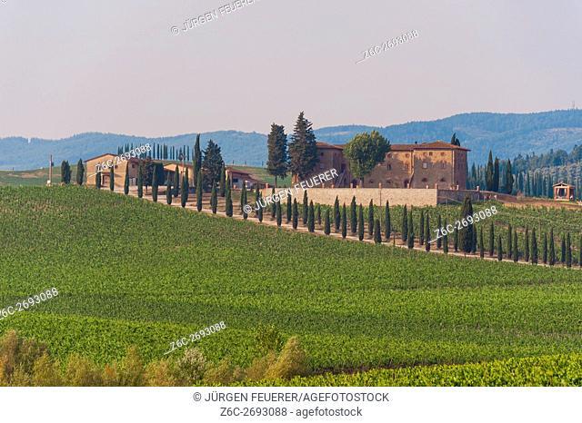 Vineyard in the region of Monteriggioni, Tuscany, Italy