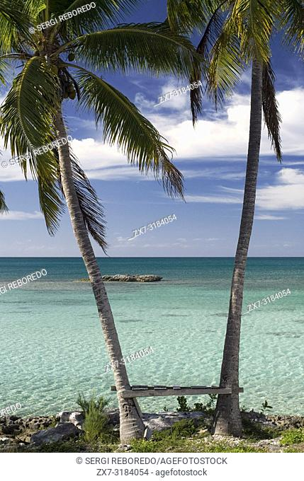 Palms in front of the beach. Fernandez Bay Village resort, Cat Island. Bahamas