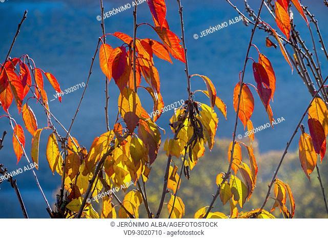 Autumn leaves, Saja Natural Park, Saja-Nansa, Cantabria, Spain Europe