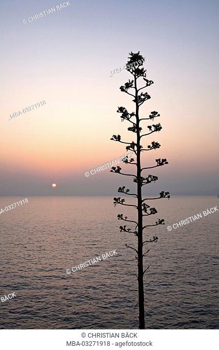 Sundown in Cap Ferrat, Cote d'Azur, Saint-Jean-Cap-Ferrat, Provence-Alpes-Cote d'Azur, France