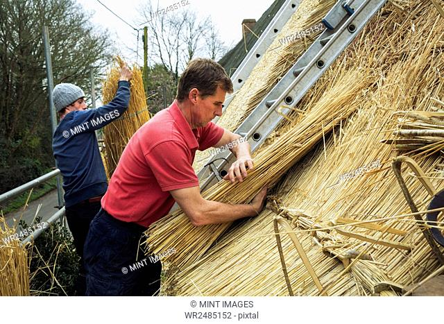 Two men thatching a roof, layering yelms of straw