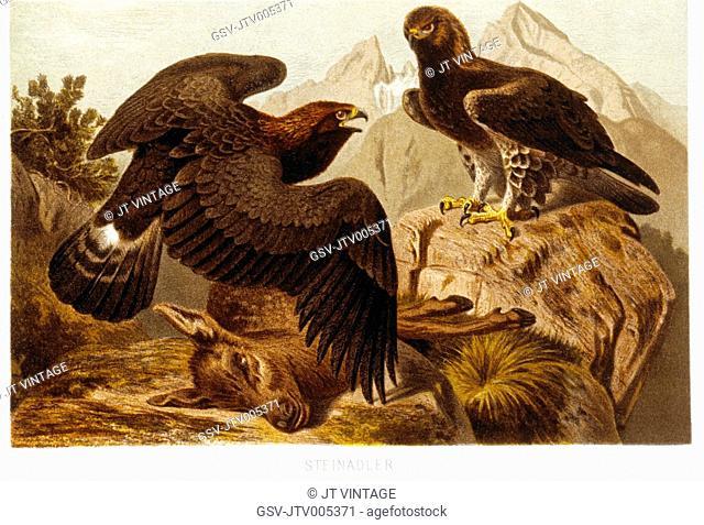 Stone Eagles, Chromolithograph, circa 1898