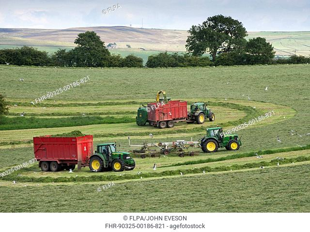 Forage harvesting grass for silage, forage harvester cutting grass and loading wagons, West Marton, North Yorkshire, England, july