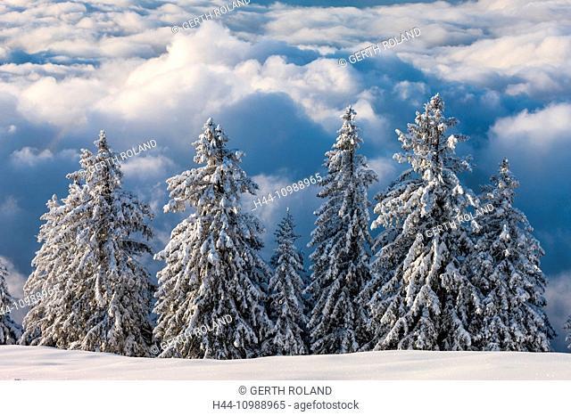 View from Rigi Staffelhöhe forest in winter to Central Switzerland