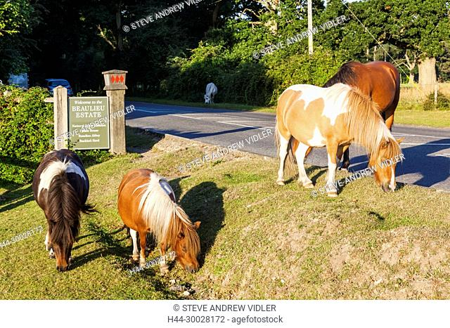 England, Hampshire, New Forest, Beaulieu Estate Sign and Ponies
