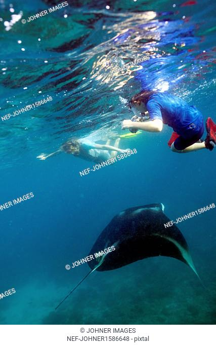 A woman and a young boy swiming with a Manta ray