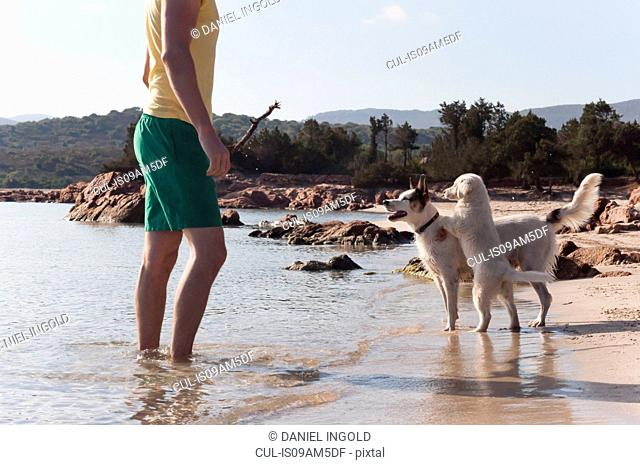 Mid adult man playing stick with two dogs on beach, Sardinia, Italy