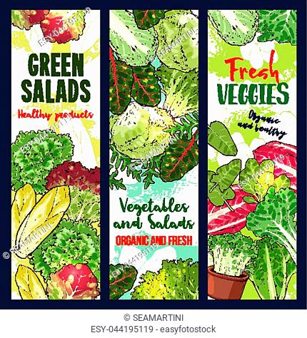 Vegetarian salads or lettuce vegetables sketch banners. Vector design of vegan chicory and oakleaf lettuce or spinach, watercress veggie or pak choi cabbage and...
