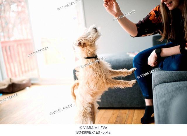 Woman giving dog training treat