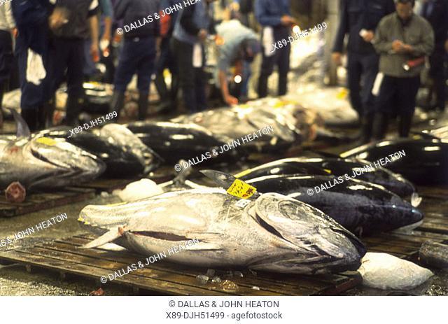 Japan, Tokyo, Tsukiji Market, Tuna Fish