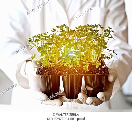 Scientist holding glowing potted plants