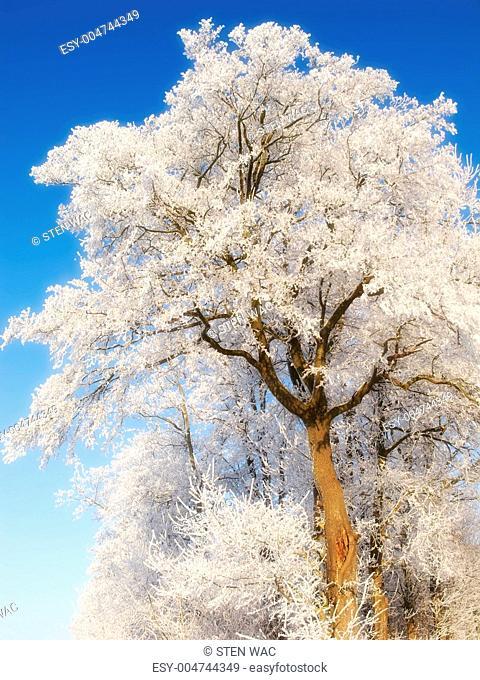Winter beauty - nature