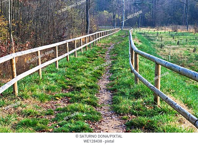 Trail with wooden railings leading towards a forest