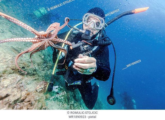 Diver holding sea animal, Adriatic Sea, Dalmatia, Croatia