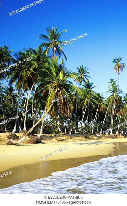 Venezuela, Aragua State, Henri Pittier National park, Choroni, beach and coconut trees