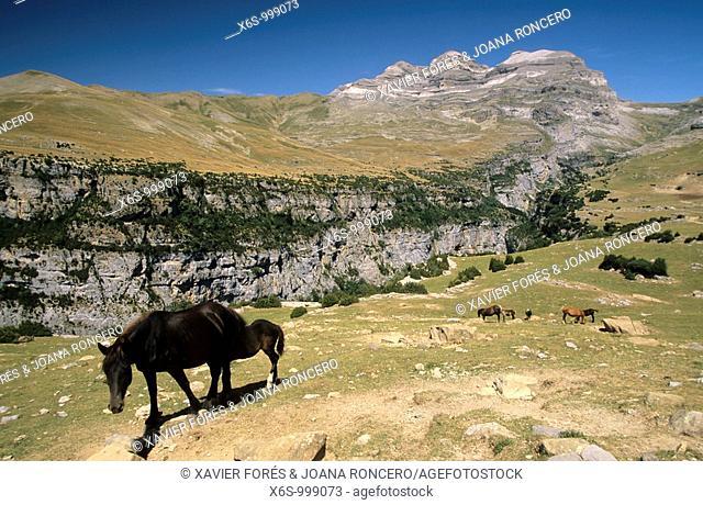 Añisclo canyon and Tres Sorores, National park of Ordesa and Monte Perdido, Huesca, Spain / Cañon de Añisclo y las Tres Sorores