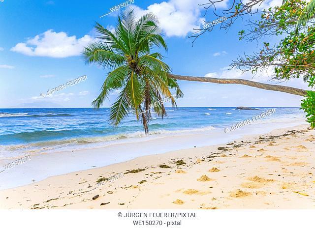Beach of the Seychelles, Island Mahé, coast at Beau Vallon