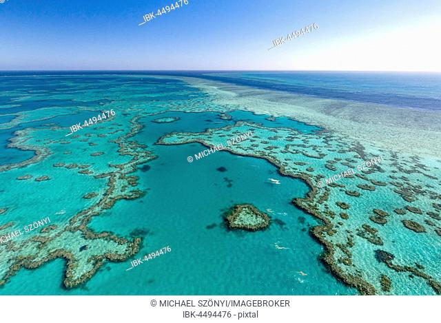 Coral Reef, Heart Reef, part of Hardy Reef, Outer Great Barrier Reef, Queensland, Australia
