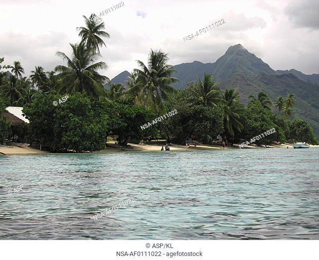 Trees on a seashore, Moorea, Tahiti, French Polynesia, South Pacific