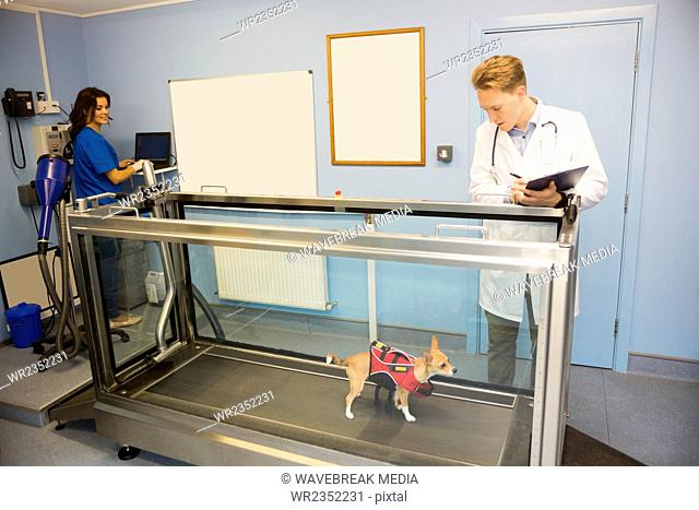 Vets looking at a dog on hydrotherapy treadmill