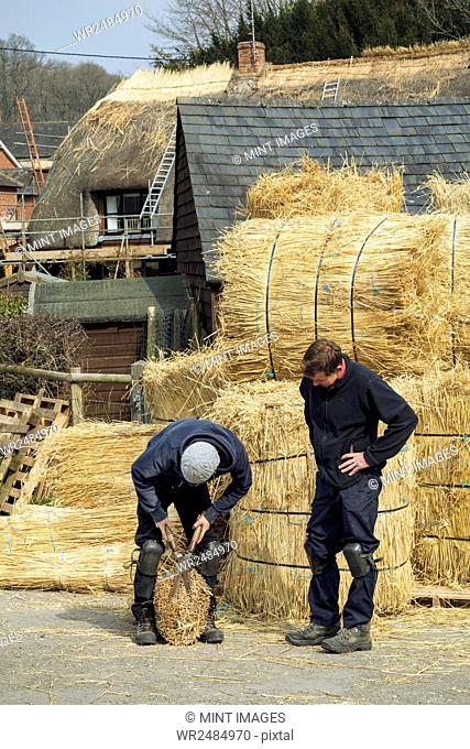Two thatchers, one cutting a yelm of straw with a pair of shears
