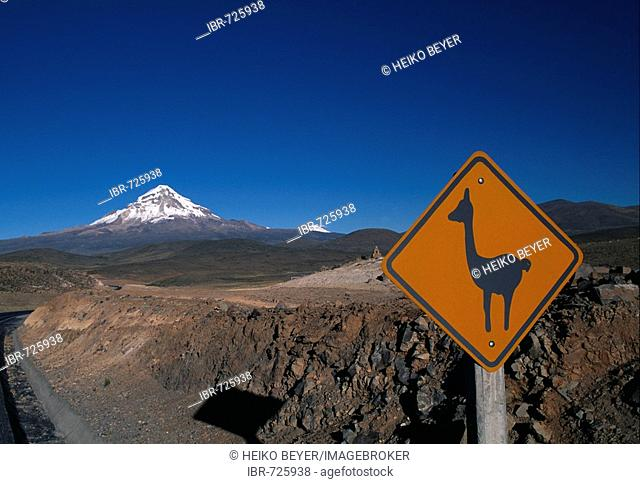 Llama crossing sign, Sajama Volcano in the background, Altiplano, Oruro Department, Bolivia, South America