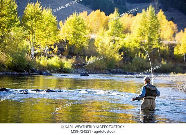 Man fly fishing on the Bigwood River, Sun Valley, Idaho, USA