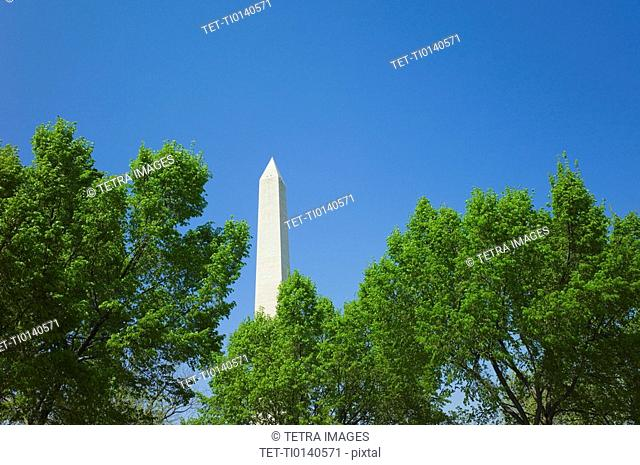Trees in front of Washington monument